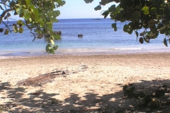 3DD--Beach-